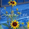 Petoskey Photographer - Sandra Lee Photography #114      Also serving Harbor Springs and all of Northern Mi
