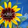 Petoskey Photographer - Sandra Lee Photography #115      Also serving Harbor Springs and all of Northern Mi