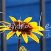 Petoskey Photographer - Sandra Lee Photography #116      Also serving Harbor Springs and all of Northern Mi