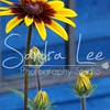 Petoskey Photographer - Sandra Lee Photography #117      Also serving Harbor Springs and all of Northern Mi