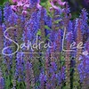 Petoskey Photographer - Sandra Lee Photography #120      Also serving Harbor Springs and all of Northern Mi