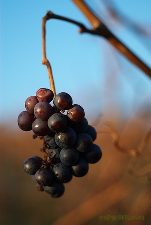 Fruits & Berrys