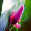 Phallic Flower