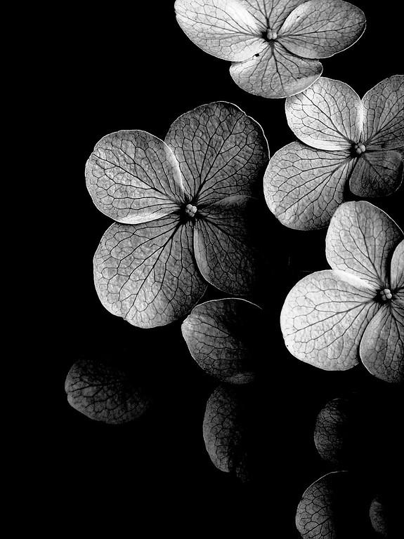 Petals in Contrast