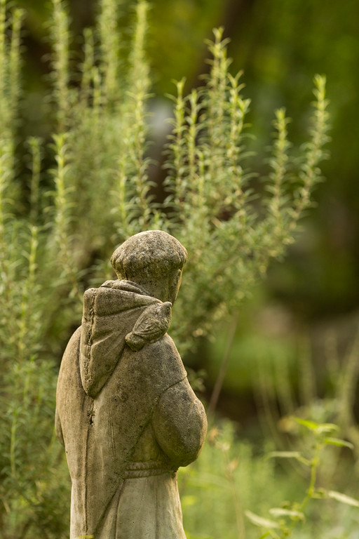 St. Francis statue with Rosemary