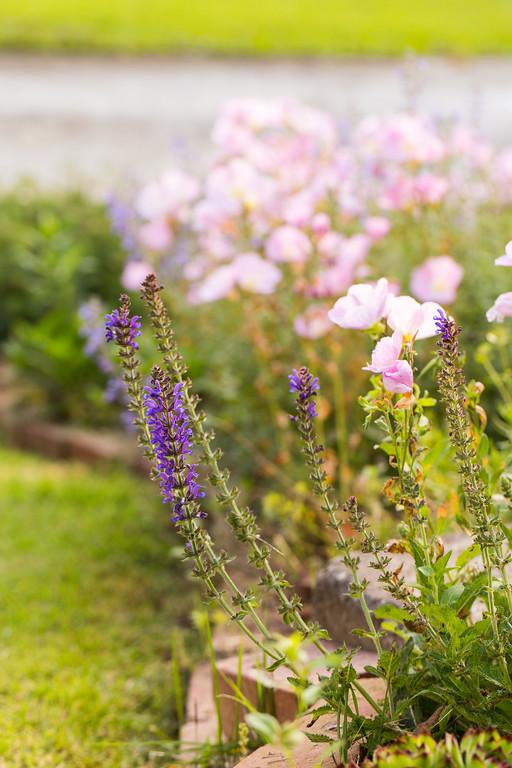 Speedwell and Missouri primrose