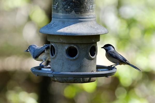 Birds at birdfeeder