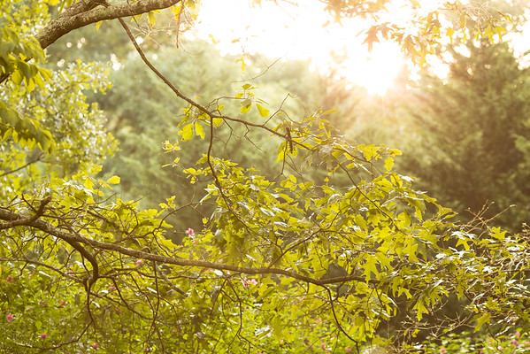 Sun rising over the trees