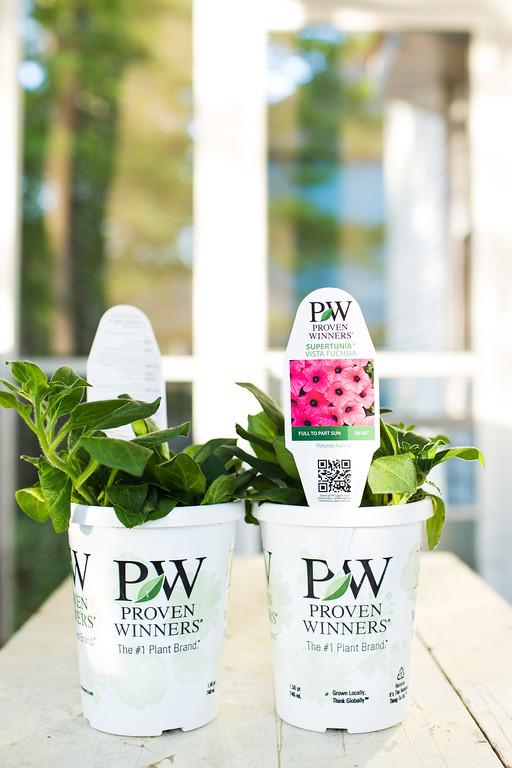 Supertunia Vista Fuchsia Improved Petunia Proven Winners
