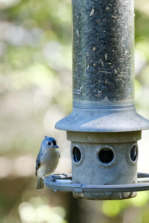 Tufted titmouse on bird feeder