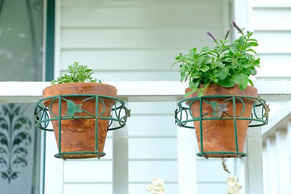 Petunias and calibrachoa