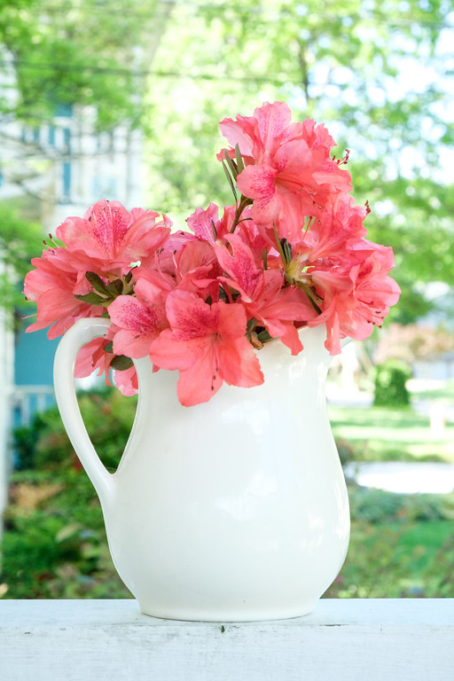 watermelon red azaleas in white vase