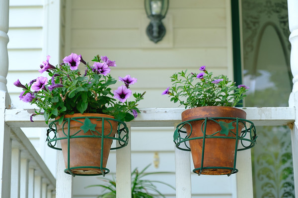 Petunias and calibrachoa