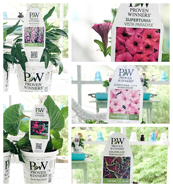 Collection of annuals from Proven Winners
