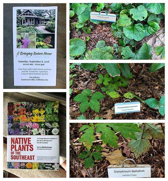 Collage of native plants garden tour