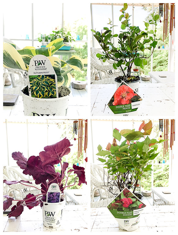 Perennials from Proven Winners in a collage