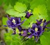 "I would have said ""dark purple"" . . . but no; it's dark iris."