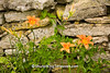 Day Lilies and Stone Fence, Lafayette County, Wisconsin