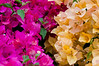 Bougainvillea is another required element...<br /> I wish I could get it to look like this..
