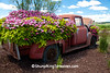 Ford Truck Full of Flowers, Iowa County, Wisconsin