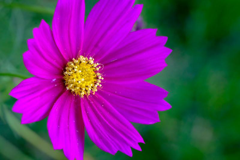 Purple and yellow look really good together. #macro #xt2 #fujixt2 #wildflowers #igtexas #texaspanhandle