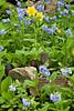 Flowers, Rocks, and Birds, Dane County, Wisconsin