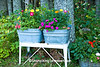 Vintage Tubs with Flowers, Houghton County, Michigan