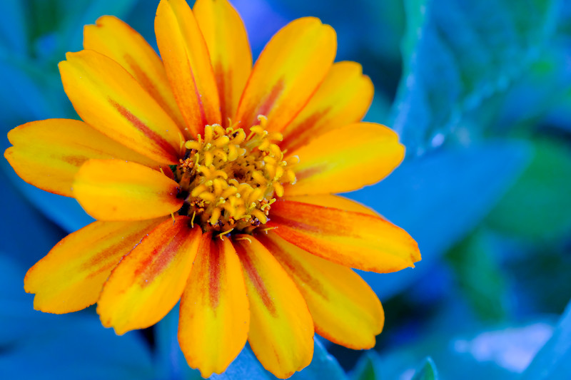 A garden flower that I found in the neighborhood. #macro #flower