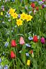 Spring Garden, Dane County, Wisconsin