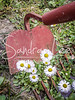Garden Tools<br /> <br /> Images from the Garden by Petoskey photographer, Sandra Lee<br /> These images can be cropped at checkout for many different arrangements.<br /> They would make a great canvas collection.<br /> <br /> ©Sandra Lee Photography Studio (all rights reserved) Do Not Copy Images<br /> Watermark signature will not be on your prints.<br /> <br /> Please be aware that coloring and brightness look different on different computer monitors.<br /> If any picture needs adjustment, it will be done before printing.<br /> <br /> Sandra Lee Photography Studio & Gallery<br /> 231-622-2066<br /> sandraleephotography@hotmail.com