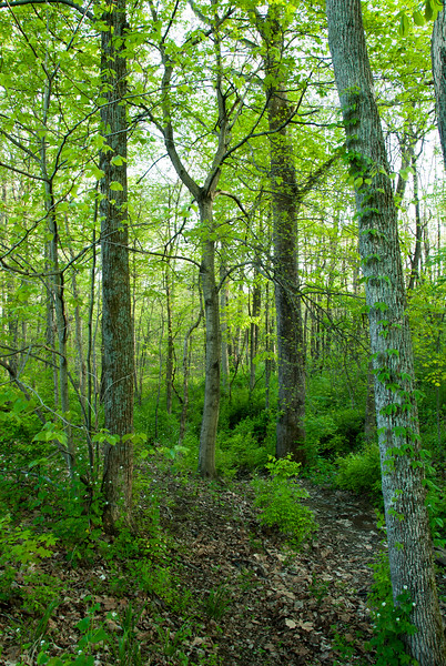 Boone County Arboretum in Northern Kentucky