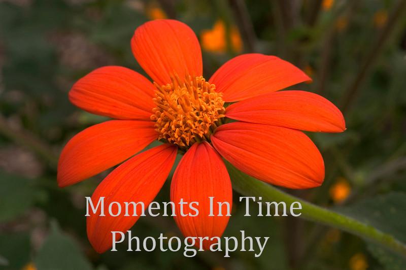 Bright orange blossom