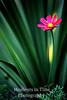Tall pink blossom