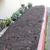 New high quality soil added but no plants yet