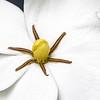 200528 Gardenia 1 - center v2