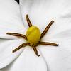 200528 Gardenia 1 center v2