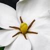 200528 Gardenia 1 center v1