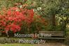 Azaleas with park bench