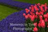 Pink tulip corner