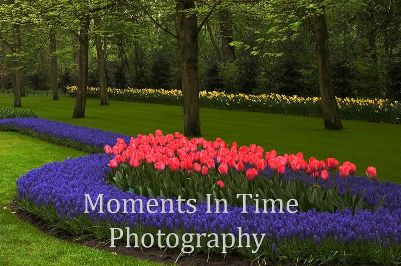 Pink tulips, blue hyacinths