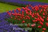Red tulip corner