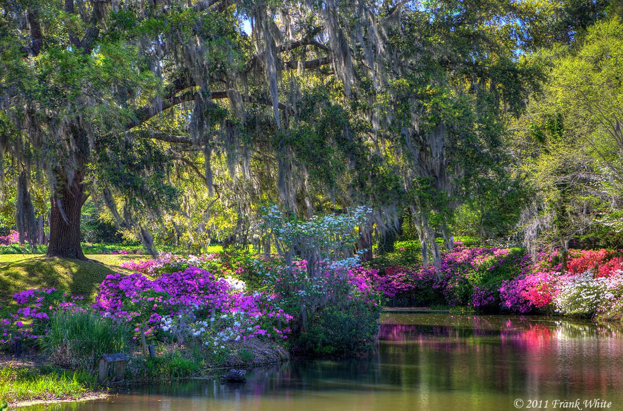 Middleton Place Gardens, Charleston SC
