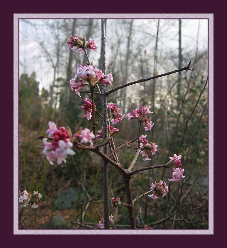 Blossoms at UNCC Botanical Garden cl [borders, sandstone texture] (IMG_5649)