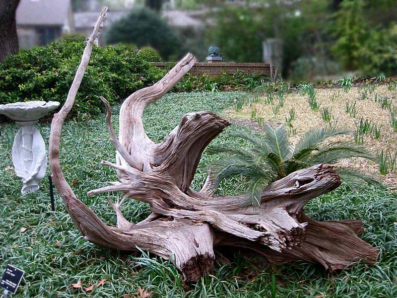 Large driftwood at Ft Worth Botanic Garden