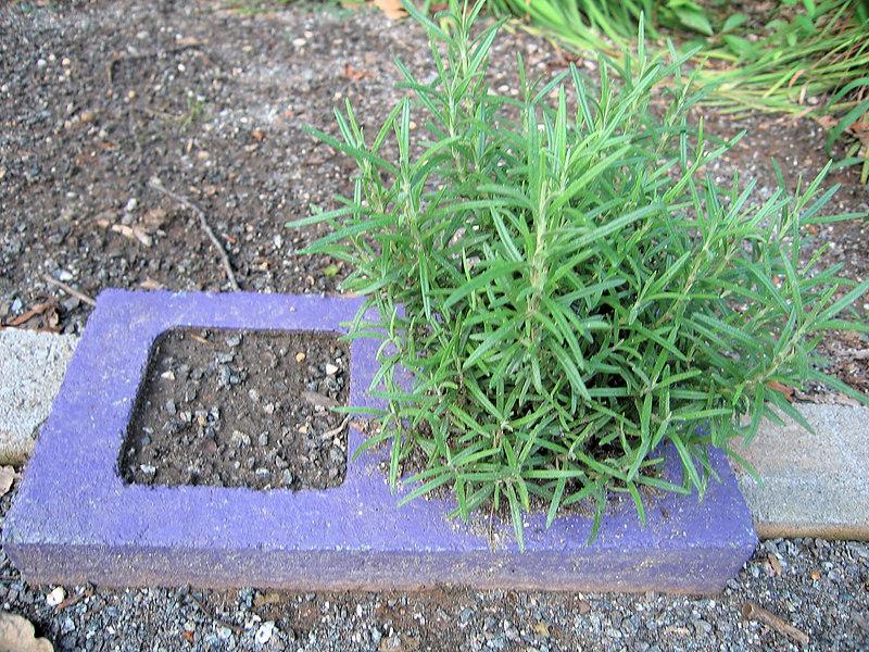 Rosemary concrete block