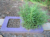 Rosemary concrete block