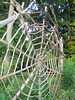 Wooden spider web and spider cl