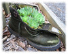 00aFavorite Old shoe with cactus [edgefade10 frame]