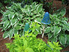 Rita Bigham's garden - hostas and statues of mushrooms