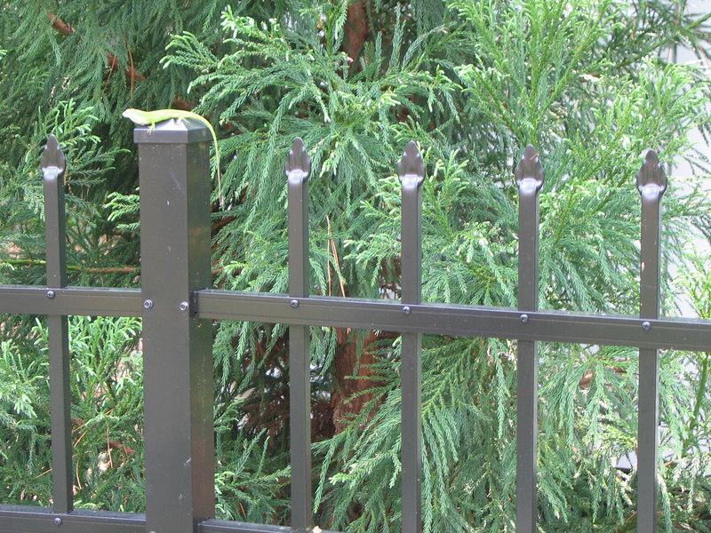 Rita Bigham's garden - lizard on fence